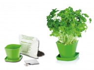 Herb Parsley
